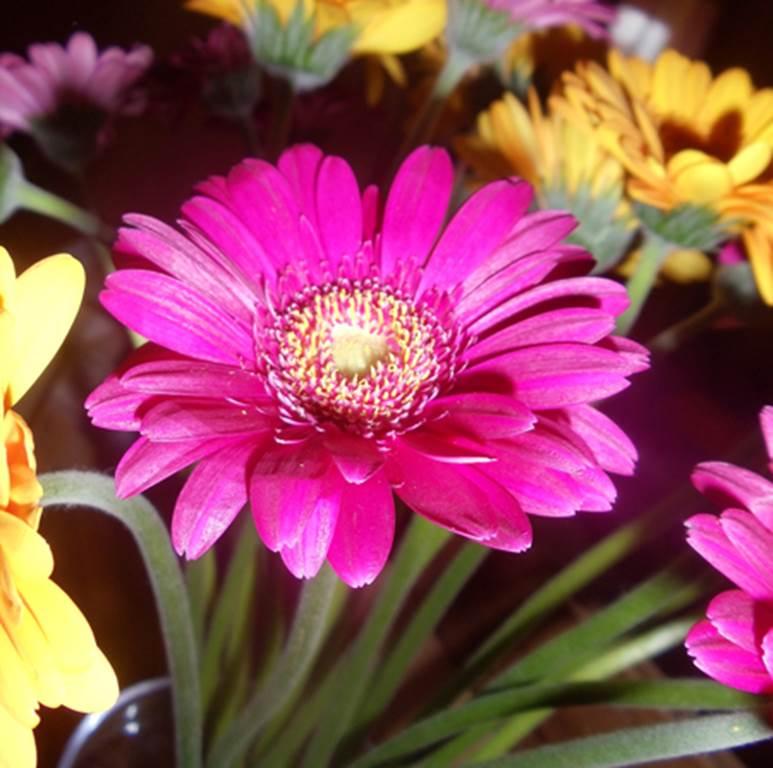 The Floral Farm