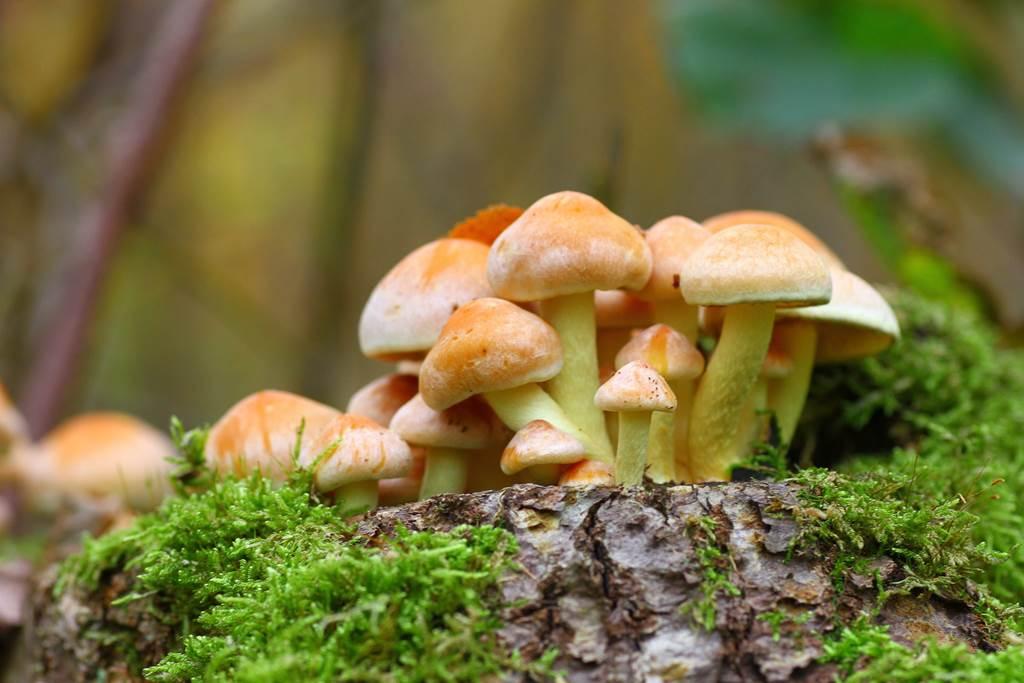 Mycologie à Signy-l'Abbaye