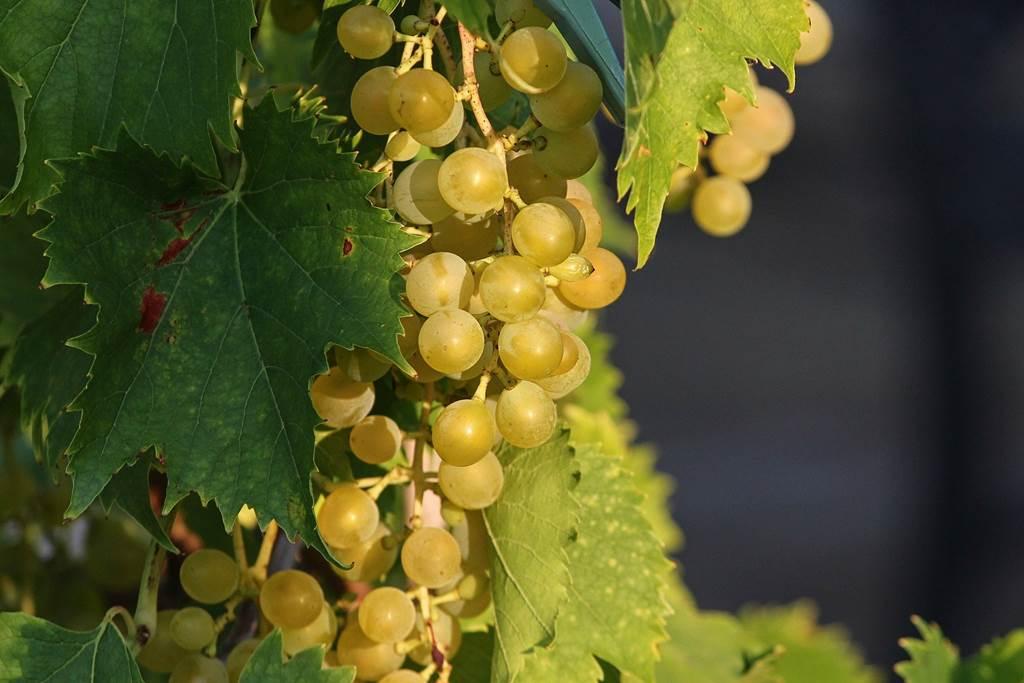 GAEC Fruits de l'autan - Bernadou Sébastien