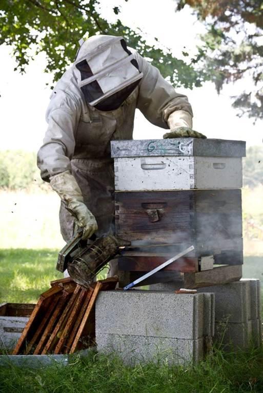 Visite de Bee au Top - Le rucher de Fontabeilles