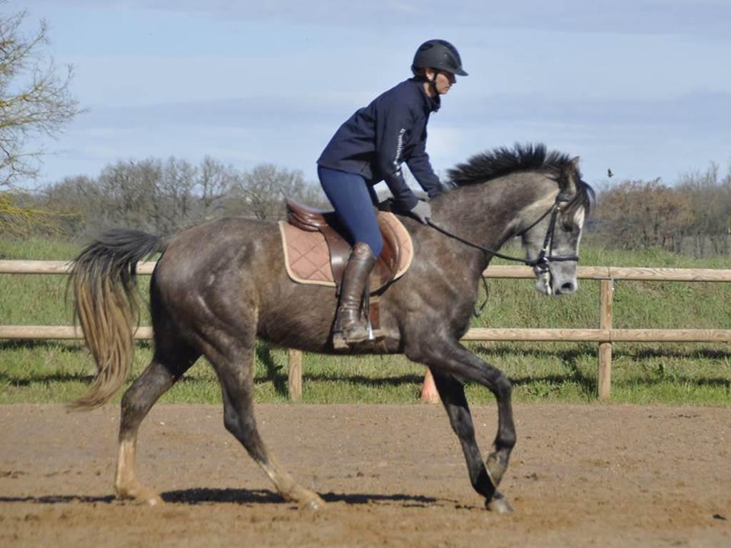 Écurie Horse Evolution