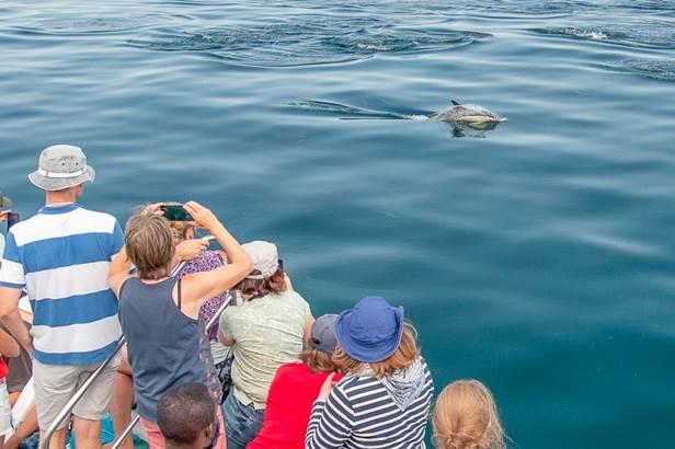 faune-ocean-locmariaquer-morbihan-bretagne-sud ©