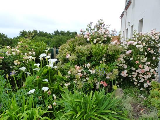 Lambotin jardin ©