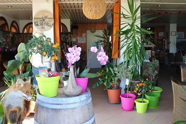 Accueil-Hôtel-Oasis-Bretonne-Arzon-Presqu'île-de-Rhuys-Golfe-du-Morbihan-Bretagne sud © Vert Mer