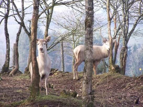 Parc-Animalier-Chez-Dame-Nature-Meslan-Pays-Roi-Morvan-Morbihan-Bretagne-sud © Chez dame nature