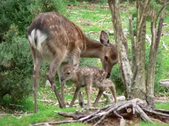 Parc-Animalier-Chez-Dame-Nature-Meslan-Pays-Roi-Morvan-Morbihan-Bretagne-sud © OTPRM