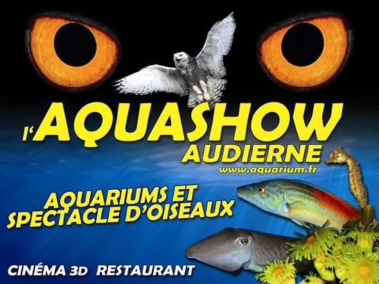 aquashow-audierne-Groix-Lorient-morbihan-bretagne-sud © Aquashow
