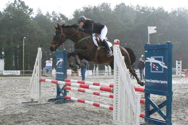 Ecole-Equitation-Petit-Bois-Surzur-Golfe-du-Morbihan-Bretagne sud ©