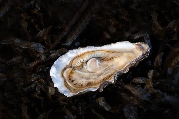 Cailloce Eric - ostréiculteur - Saint Philibert ©
