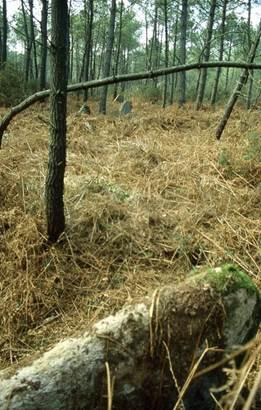 alignement de la croix pin morbihan bretagne-sud © cdt56