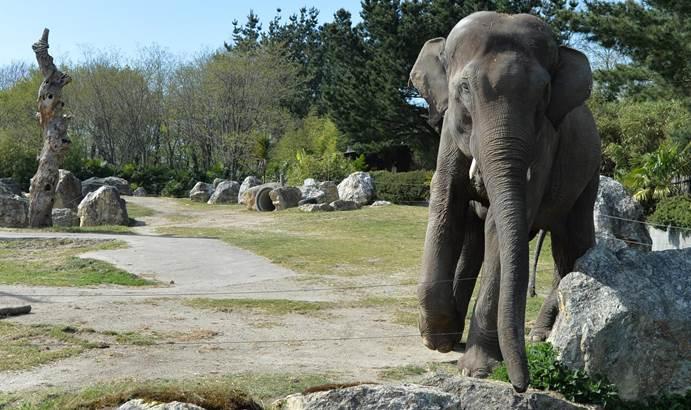 Parc-Zoologique-Pont-Scorff-Morbihan-Bretagne-Sud-09 © Michel RENAC