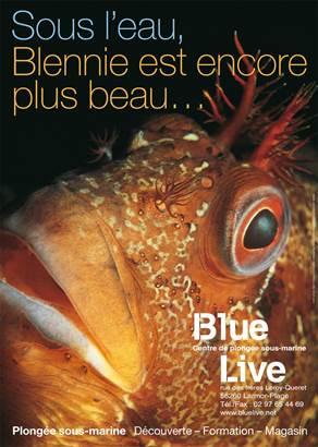 plongee-Larmor-Plage-Groix-Lorient-Morbihan-Bretagne-sud © Blue Live
