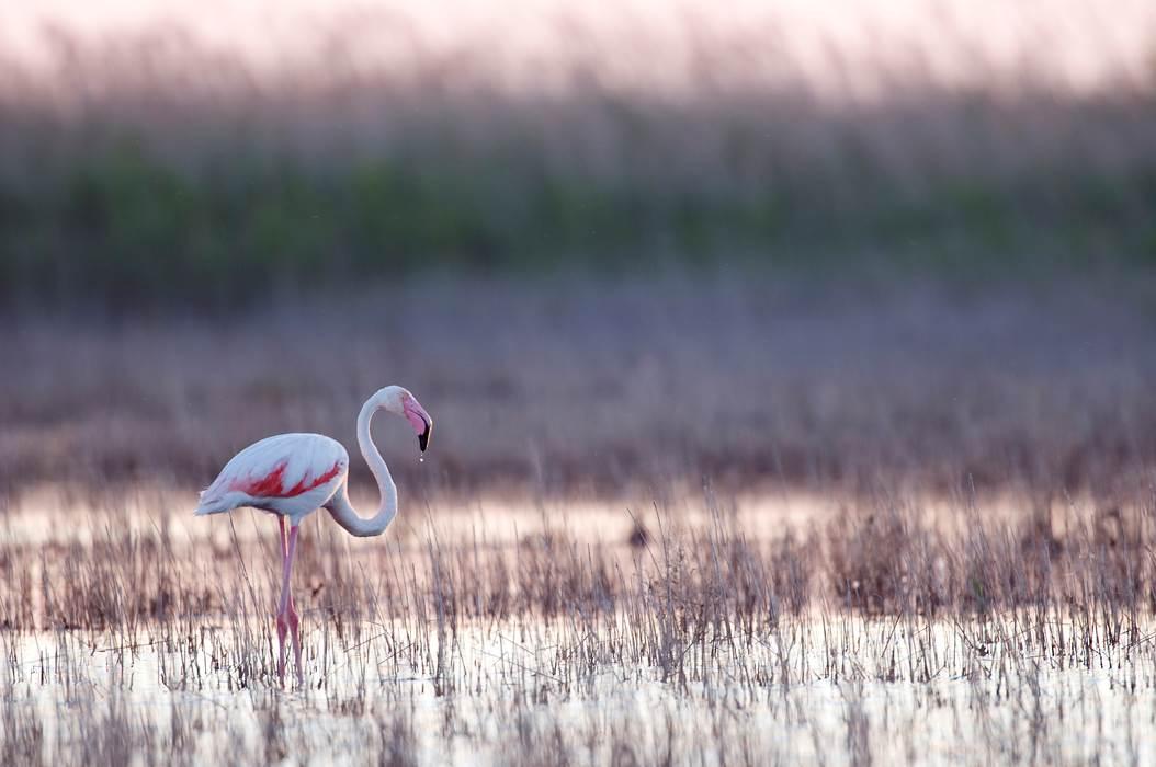 5 idées de week-end pour observer les animaux en pleine nature