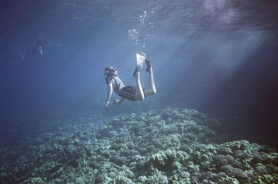 Les meilleurs spots de plongée en France