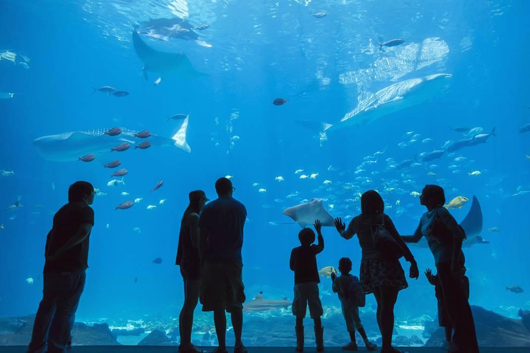 Top 10 des plus beaux aquariums de France