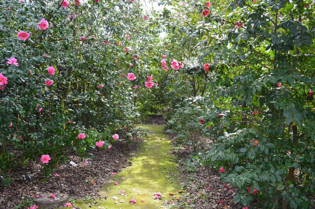 Parc floral des camellias