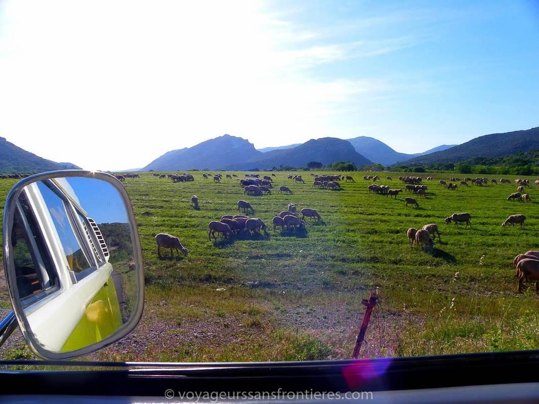 Voyageurs sans frontie`res moutons ce´venols