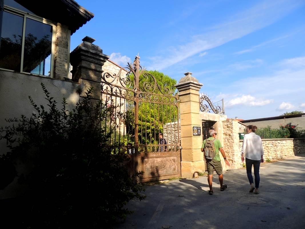 Visite de l'oliveraie