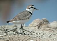 Sortie nature : Observons les oiseaux