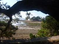 Balade commentée, ludique et conviviale de l'île Berder