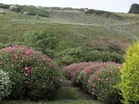 Jardin de la Boulaye