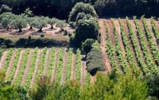 Cave les Vignerons du Mont Ventoux