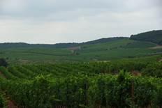 Languedoc-Château-des-Estanilles-1