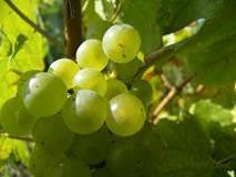 Chemins de vignes et d'histoire en Bourgogne et en Beaujolais
