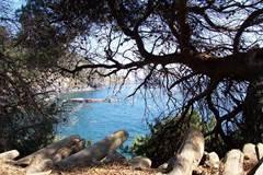 Randonnée sur le sentier du littoral de Six-Fours