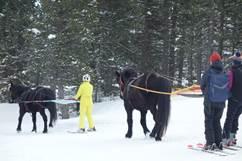 Ski Joering solo avec Angaka Village Nordique