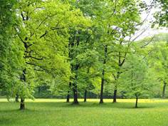 Parcours athlé nature : Parc thermal d'Ussat-Les-Bains