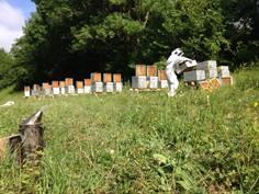 Les ruchers de Pyrène
