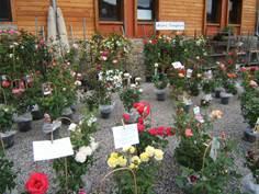 Marché aux fleurs et produits de terroir