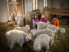 La ferme école des Moulis