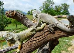 Les bêtes curieuses des Pyrénées et d'ailleurs