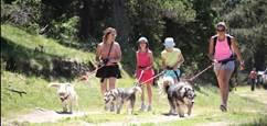 Cani-marche - Balade à 6 pattes avec Angaka