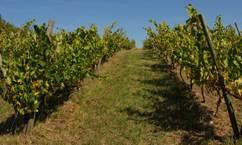 Les vignobles de Larthet