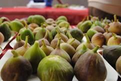 Les tindoulets de la figo