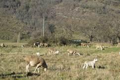 La ferme de Radalenque