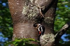 Sortie Ornithologique - Xploria