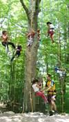 Petits Débrouillards en forêt pour les 6/12 ans