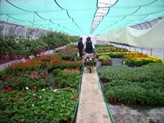 Maraichers et horticulteurs Dupin