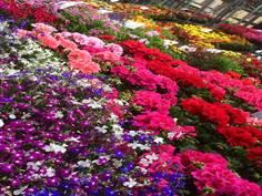 Cros horticulture
