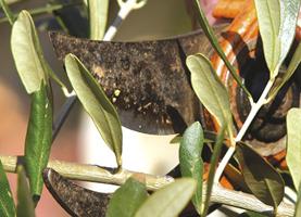 Alès : VEZENOBRES - dimanche 31 mai 2020 - Fête des bonnes herbes