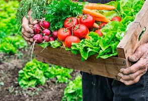 Alès : ALES - jeudi 17 octobre 2019 - L'agriculture paysanne du Gard