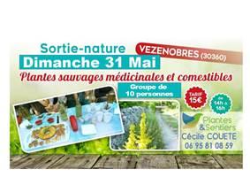 Alès : VEZENOBRES - dimanche 31 mai 2020 - Découverte des plantes sauvages médicinales et comestibles