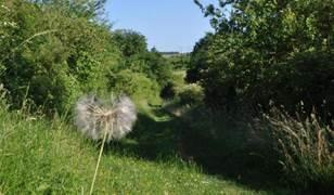 Les vallées sèches de Buxerolles