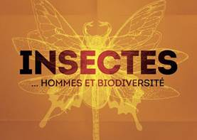 expo insectes poitiers