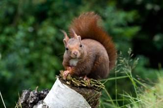 Ces animaux que l'on peut observer en automne