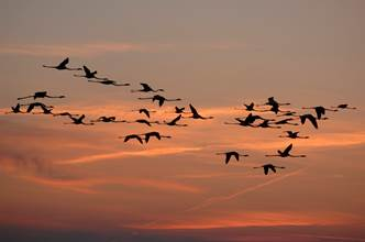 La migration en automne : quand les oiseaux dansent dans le ciel